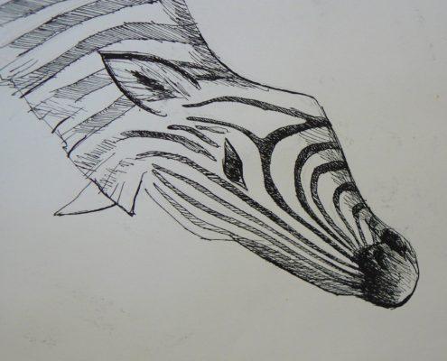 Kurz kreslení Praha- studie hlavy-jak nakreslit koně, zebru, osla