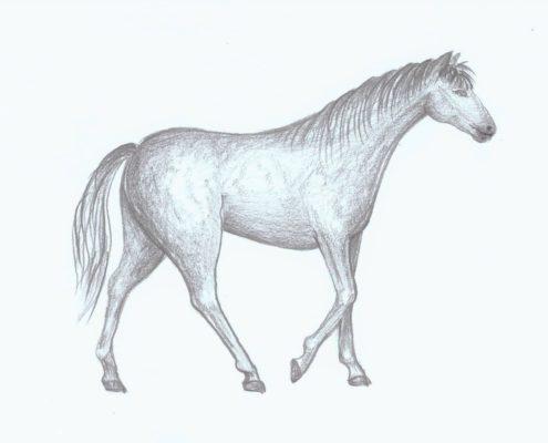 jak nakreslit koně Ateliér ŠUM